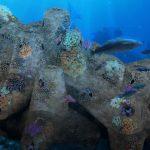 Un innovador desarrollo de hormigón permite el desarrollo de hábitats marinos artificiales
